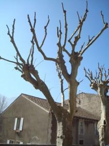 Taille des arbres Mairie de saillans mars 2015